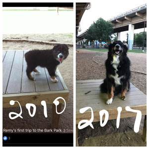 Remy at the Bark Park in Dallas